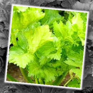 พืชผักผลไม้ ที่เหมาะสมกับธาตุน้ำ