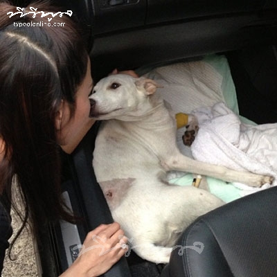 """แม่พระมาโปรด!! """"อั้ม""""  ช่วยสุนัขที่ถูกชนข้างถนน"""