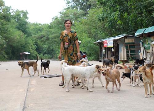 """สาวใหญ่ผู้ใจบุญ!!! """"ให้ข้าว-ให้น้ำ"""" เลี้ยงดูสุนัขจรจัดนับ 100 ตัว เป็นอย่างดีมากว่า 6 ปีเเล้ว!!!"""