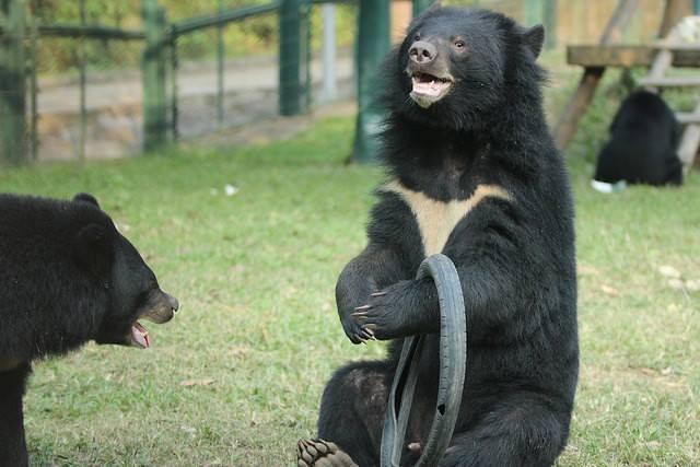 """Bradley เจ้าหมีเเสนซน!!! """"ที่ติดของเล่นสุดโปรด"""" อย่างยางรถจักรยานยนต์มาตั้งเเต่เด็ก!!!"""