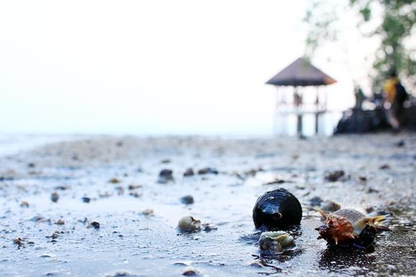 """หาดทรายดำ จ.ตราด!!! """"หนึ่งในสถานที่สุดมหัศจรรย์"""" ที่มีเพียง 5 เเห่งทั่วโลก!!!"""
