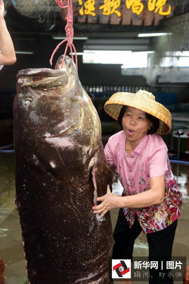 อิ่มทั้งหมู่บ้าน! ชาวประมงในไห่หนาน จับปลาหมอทะเลยักษ์ได้ น้ำหนักมากกว่าร้อยโล
