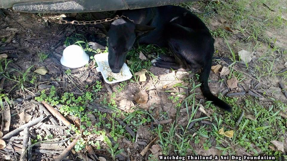 """เจ้าหน้าที่บุกจับ """"ร้านค้าเนื้อสุนัข"""" พบเนื้อสุนัขชำแหละเพียบ ดียังช่วยสุนัขรอดได้อีก 2 ตัว"""