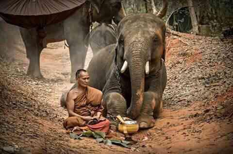 ชมกันเต็มๆ ช้างแสนรู้หมอบกราบพระ จากสำนักสงฆ์ป่าอาเจียงเลี้ยงดูไว้