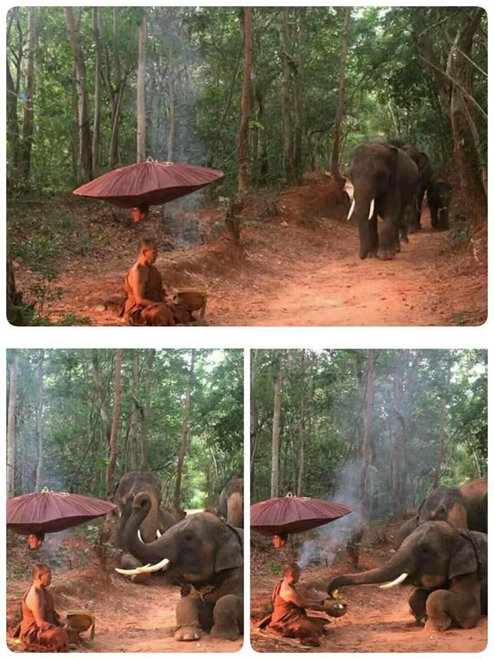 """ขนลุก !! แชร์สะนั่นภาพพระนั่งกรรมฐาน """"โขลงช้างป่า"""" ไม่มาทำร้ายแต่กลับทำแบบนี้!!"""