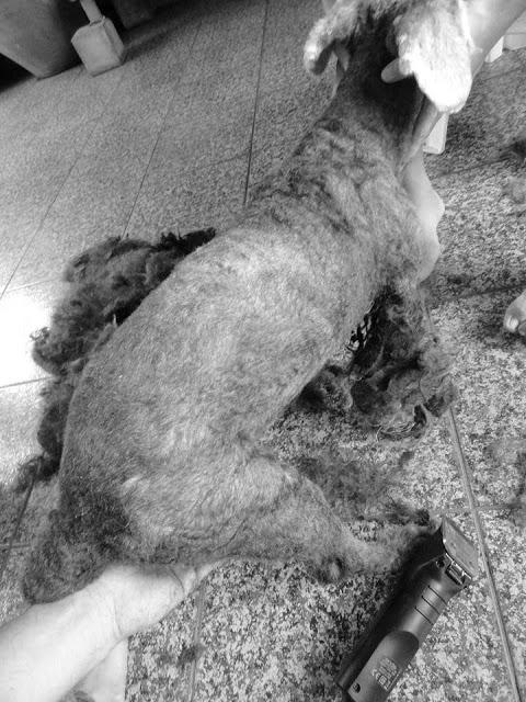 หนุ่มจิตอาสา ขอตามรอยเบื้องพระยุคลบาท ช่วยเปลี่ยนสภาพสุนัขจรจัดให้กลับมามีชีวิต!!!