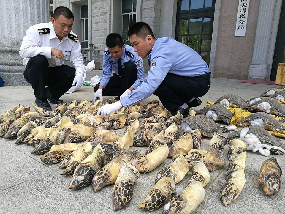 """""""เจ้าหน้าที่จีน"""" จับกุมขบวนการลักลอบขนสัตว์น้ำหายาก ครั้งใหญ่จากเวียดนาม!!!"""