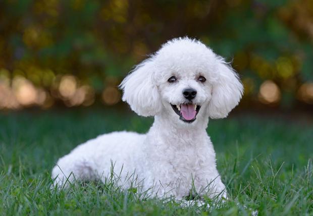 """""""5 สายพันธุ์สุนัข"""" ที่ได้ชื่อว่าเป็นมิตรกับมนุษย์มากที่สุด!!!"""