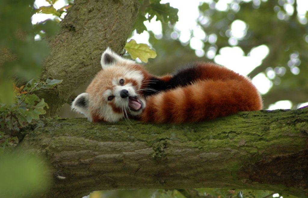 อยากเสียว เลี้ยวเข้ามา…!!! สวนสัตว์แปลกพร้อมท้าความกล้าในตัวคุณ