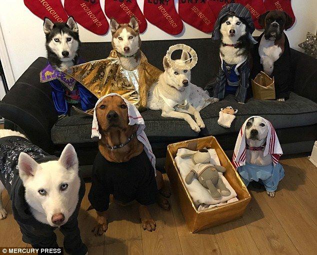 """ชมความน่ารักของ """"เเก๊งน้องหมาทั้ง 8 ตัว"""" ที่มีใบหน้าอันเคร่งขรึม!!!"""