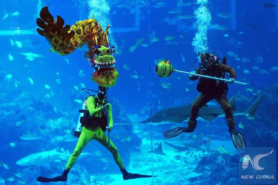 """สุดเเปลกตา!!! """"การเชิดมังกรใต้น้ำ"""" ที่พิพิธภัณฑ์สัตว์น้ำของสิงคโปร์!!!"""