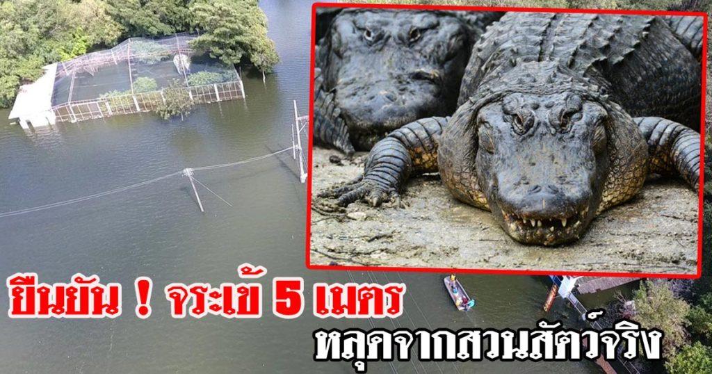 ยืนยันหลุดจริง…!!! จระเข้ 5 เมตร จากสวนสัตว์ทุ่งท่าลาด เร่งค้นหา วอนอย่าฆ่า