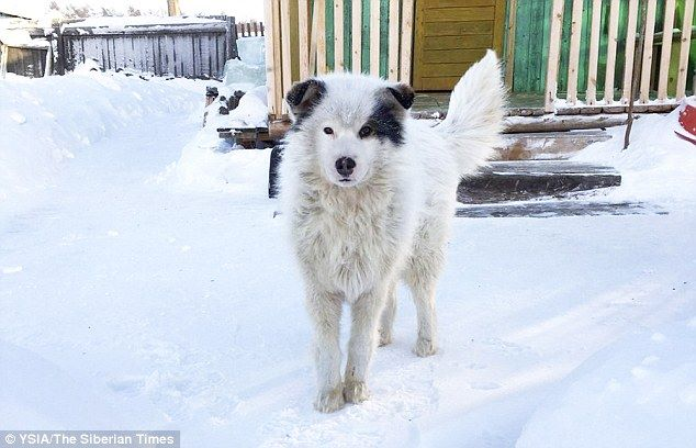 เจ้าตูบฮีโร่!!! ผู้ช่วยชีวิตเด็กน้อยวัย 2 ขวบ ที่ถูกเเม่ใจร้ายทิ้งไว้ท่ามกลางอากาศที่หนาวเย็น!!!