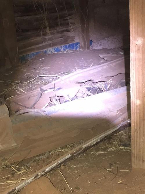 แทบช็อค…!!!เจองูหางกระดิ่งในชักโครก แต่สยองหนักมีรังงูอยู่ใต้ดิน 20กว่าตัว