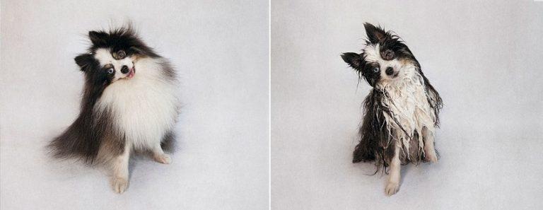 10 ภาพสุดฮา ของน้องหมา ต้อนรับหน้าฝน