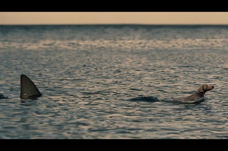 จิตใจทำด้วยอะไร!!!! ชาวประมงใช้ลูกสุนัขอายุเพียง6เดือน เป็นเหยื่อล่อฉลาม