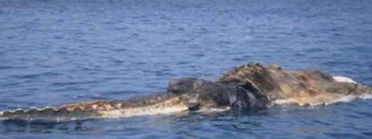 ตะลึง!!! ลูกเรือแตกตื่นเมื่อพบ สิ่งนี้ในทะเล! (ชมคลิป)