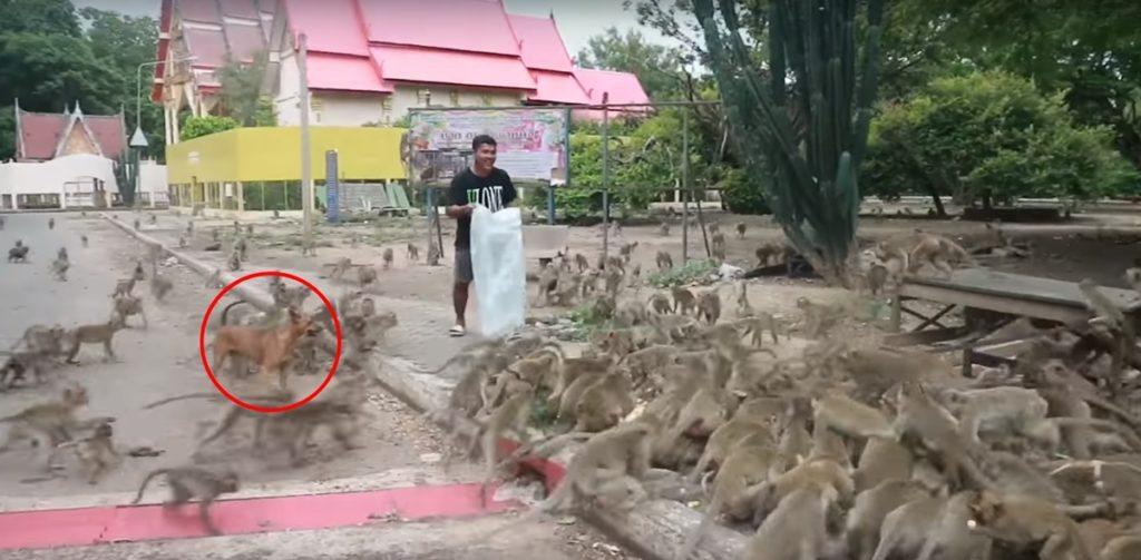 ไม่น่าเชื่อ!!! เมื่อชายคนนี้เทถุงขนมยักษ์ รวดเดียว วันเดียวคนดูเป็นล้านวิว! (ชมคลิป)