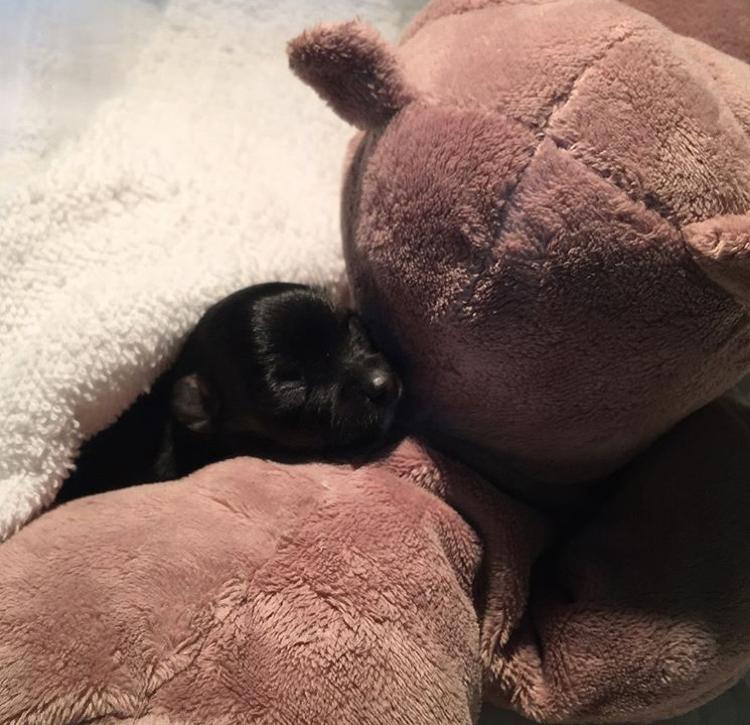 นุ่น รมิดา เศร้า!! หลังหมาที่บ้านแท้งลูก