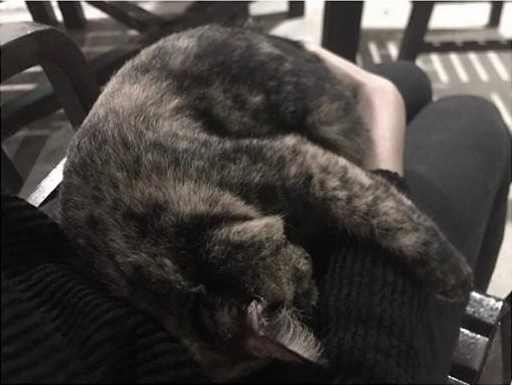 ฮาหนัก! ปุยฝ้าย ลูบหัวแมวอยู่ดีๆ กลับโดนแมวนวดหน้าอกให้ซะงั้น (ชมคลิป)