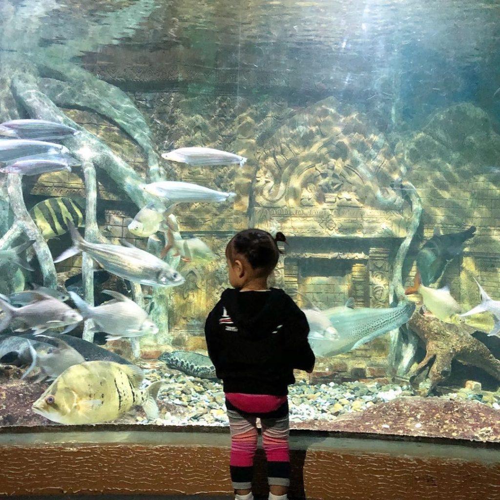 มาดูกัน! เมื่อคุณแม่กระแต – คุณพ่อหลุยส์ พา น้องเจ้าขา ตะลุยสวนสัตว์ #น่ารักมาก (ชมคลิป)