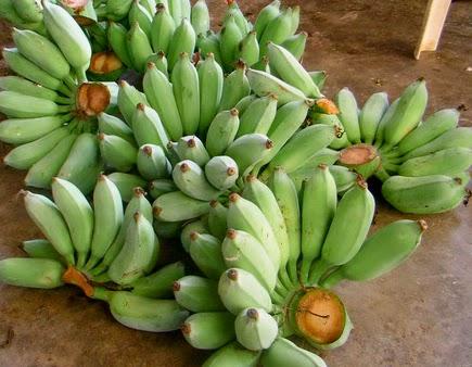 กล้วย รักษาโรคกระเพาะ