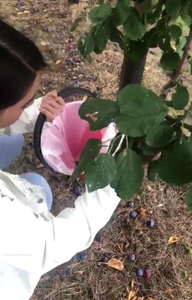 เปิดหลังบ้าน ญาญ่า ที่นอร์เวย์ เต็มไปด้วยสวนต้นพลัม