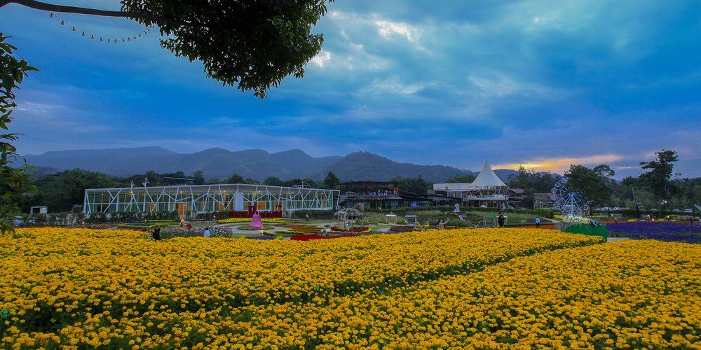 """""""The Bloom by ทีวีพูล"""" สวนดอกไม้ที่ใหญ่ที่สุด"""