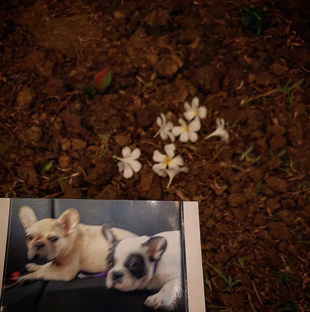 """""""พี่ตูน บอดี้สแลม"""" สุดเศร้า หลังสูญเสียน้องหมาแสนรักที่อยู่ด้วยกันมานาน 12 ปี"""