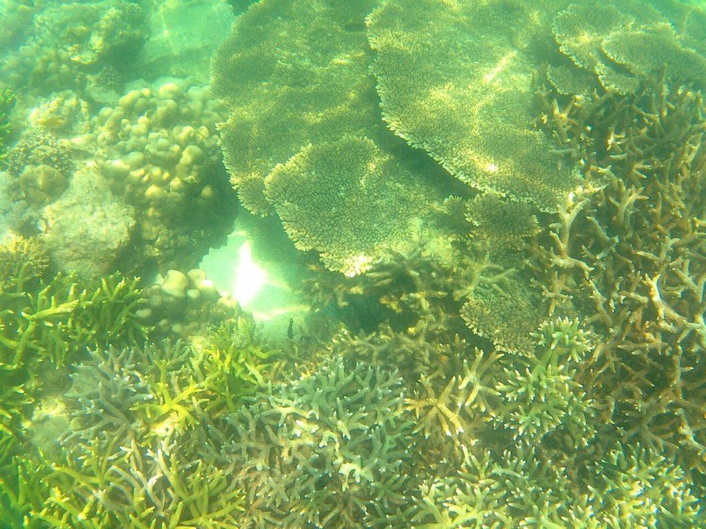 เกาะซาลิ (Sali Island)  ประเทศพม่า