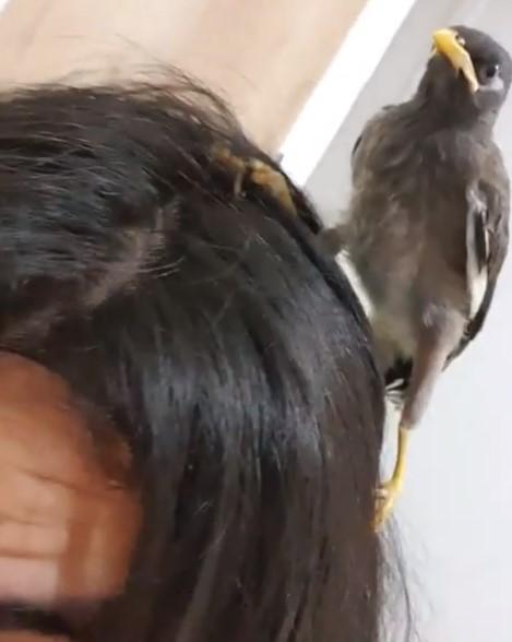 แน็ก ชาลี เผยสไตล์การเลี้ยง นกเอี้ยง