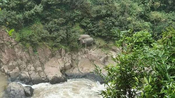 รายงานด่วน!!! ช้างป่าตายเกลื่อนหลังตกลงจากน้ำตกเหวนรก!!