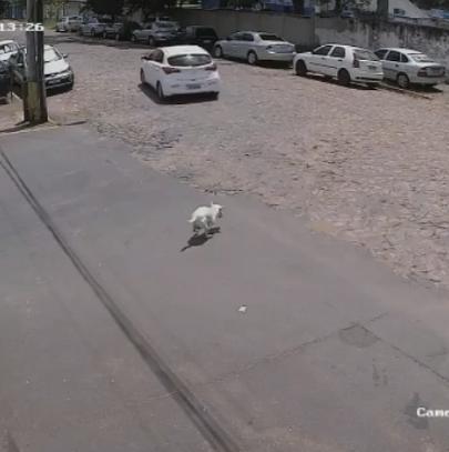 สาวขับรถ ปล่อยหมาทิ้งตัวที่พิการ เก็บตัวดีขึ้นรถ