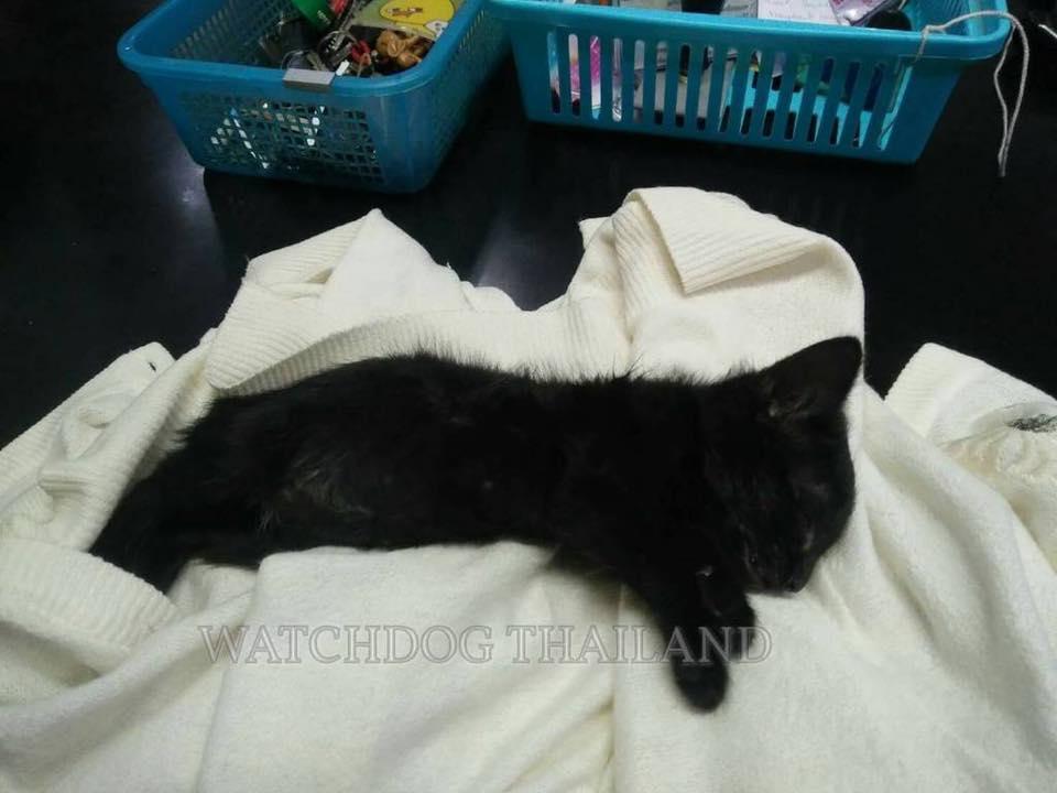 พนักงานมหาวิทยาลัย ตีแมวตาย 12 ตัว หลังรับมาเลี้ยงวันเดียว